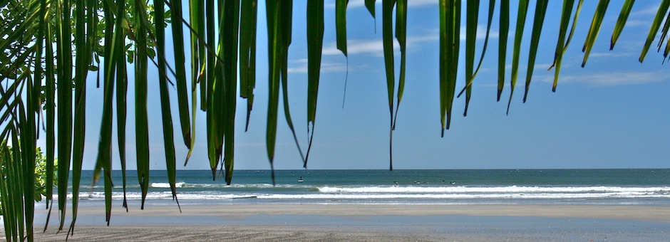 Palm_Fringe_Playa_Guiones