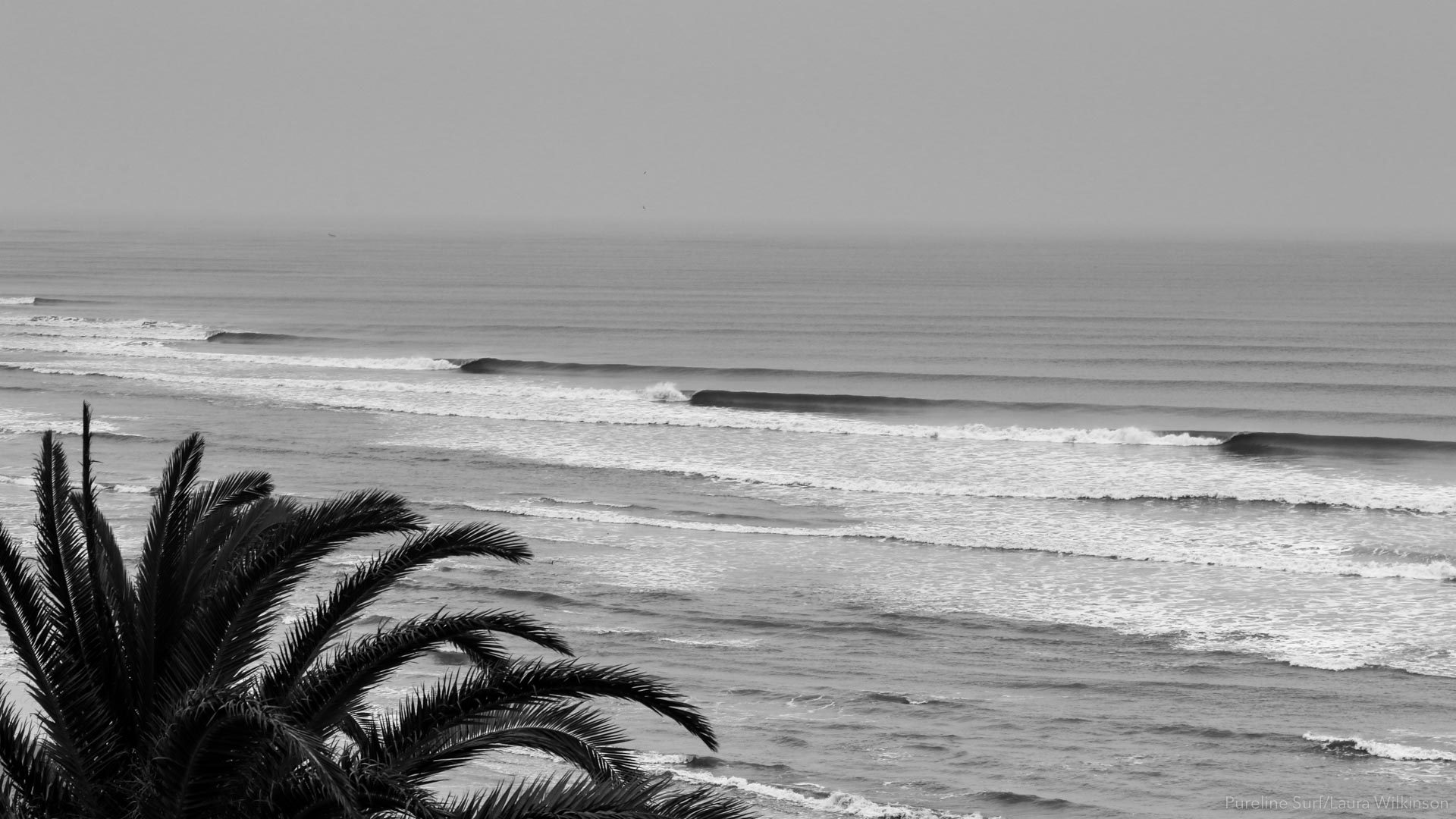 Chicama in black and white. Get the longest wave of your life during a worldwide surf coaching trip with Pureline Surf.
