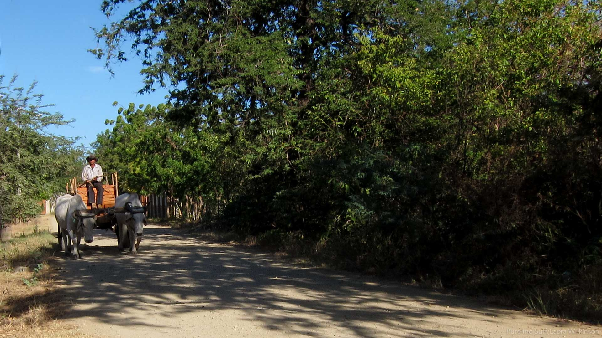 A shady road with a local man and an Ox cart. Part of the experience on a strike mission surf coaching trip with Pureline Surf.