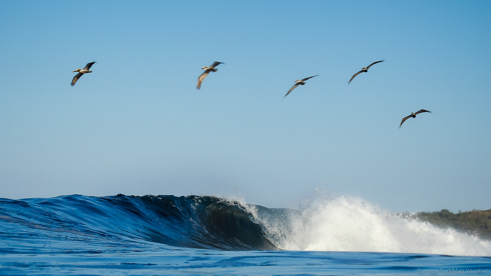 A barreling right hand beach break with brown pelicans flying overhead at Ostional Beach, a Pureline Surf coaching destination.